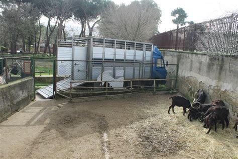 giardino zoologico napoli zoo di napoli archives road tv italia