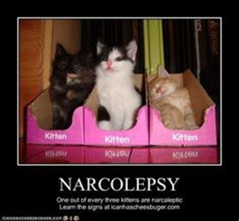 Narcolepsy Meme - 1000 images about narcolepsy on pinterest disorders