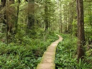 Tree Trail Woodlands Floor Plan cape alava in washington