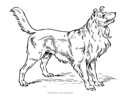 coloring pages of dogs my coloring land