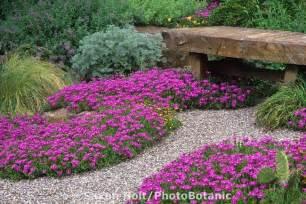 drought tolerant chanticleer drought tolerant garden