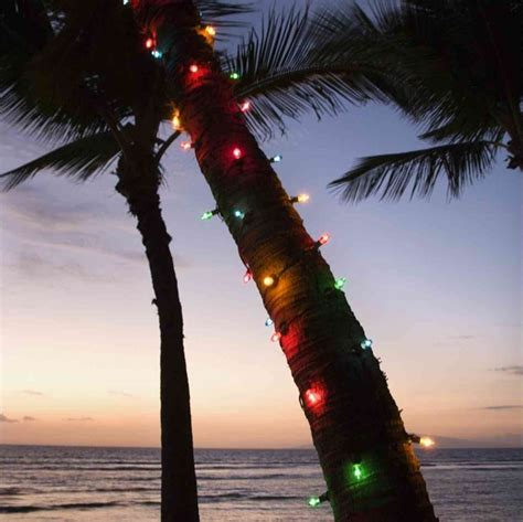 christmas palm tree life of lauren