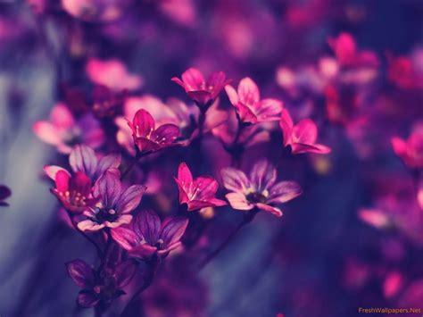 imágenes de flores wallpapers wallpapers flores 79