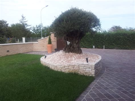 realizzazione aiuole per giardino aiuola per piante esemplari casette tettoie pergole in