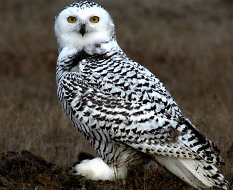 bird quizzes falcons owls and swifts