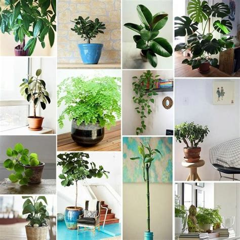 plants for bedrooms feng shui feng shui rules tips for designing a feng shui home