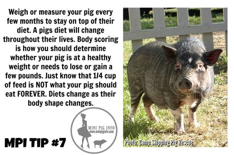 how to raise pigs in your backyard 100 how to raise pigs in your backyard our swine