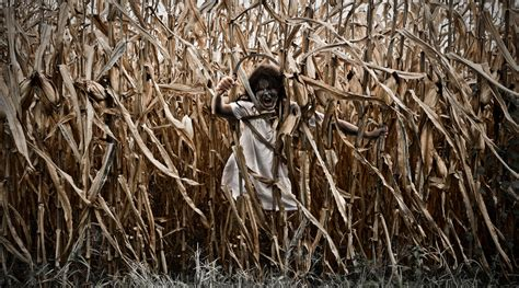 corn maze haunted house 13 creepy corn mazes and haunted hayrides modern farmer