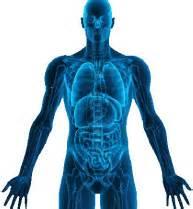 Files Fisiologi nutrition sant 233 bien 234 tre aquaflor 232 s spa sens sant 233