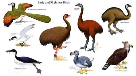 flightless birds fun kids facts