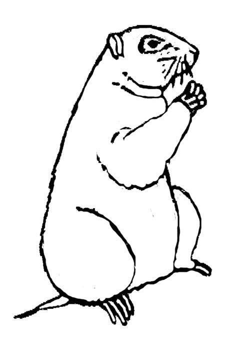 Ground Hog Coloring Page groundhog day coloring pages