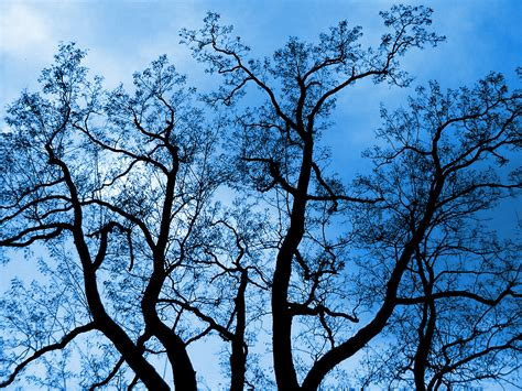 Trijee Blue blue tree by khaosprinz on deviantart