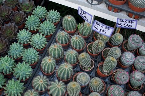 how to care for your succulents 171 a pair a spare