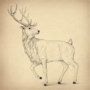 Easiest 3d Design Software how to draw animals deer species and anatomy