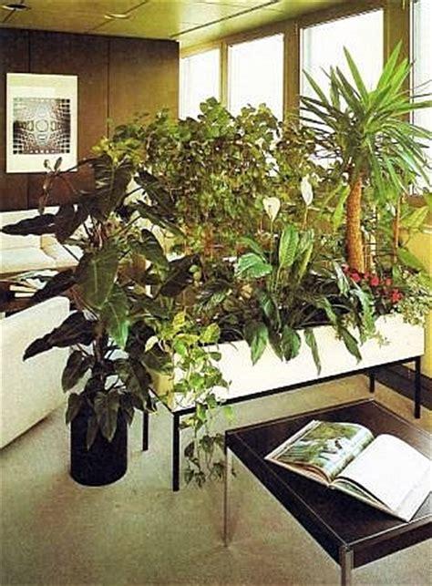 pflanzen raumteiler raumteiler pflanzen plazieren und gruppieren raum