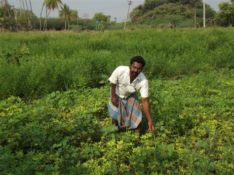 cropping pattern meaning in hindi farmer s notebook how changing cropping pattern can help