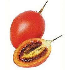 Benih Bibit Cucamelon bibit buah ketapang almond
