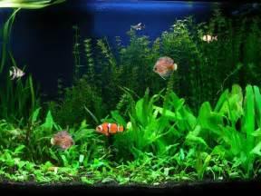Download image Free Aquarium Fish Screensaver 3 0 PC, Android, iPhone