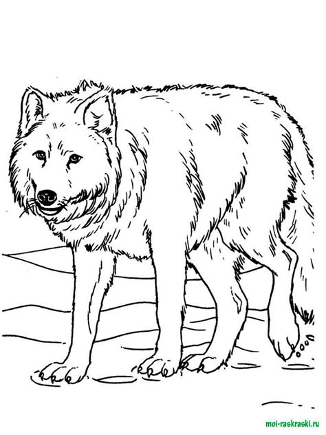 coloring page arctic wolf free coloring pages of jam arctic wolf