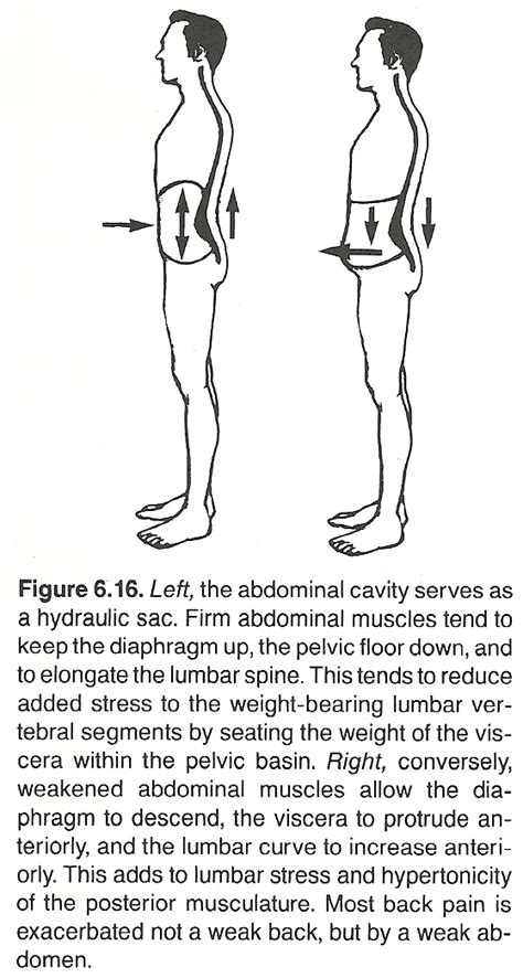 chapter 18 basic spinal subluxation considerations chiro however if the lumbar and dorsal curves increase and the