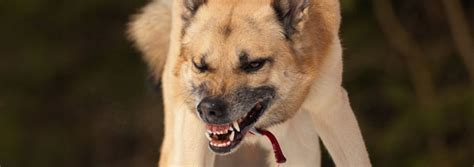 why are puppy teeth so sharp animal sharp teeth www pixshark images galleries with a bite