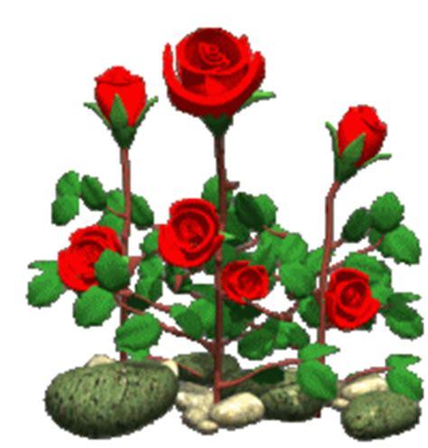 imagenes de rosas con movimiento y brillo movimiento y brillo 12gif picture by and post rosas anny