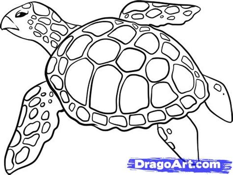 How Of Sea Turtle Pencil And In Color Sea Turtle