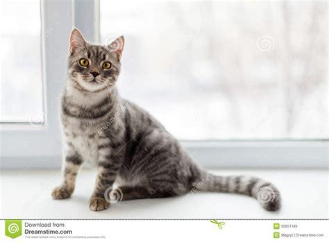 Fensterbrett Katze by Faule Katze Die Auf Fensterbrett Sitzt Selektiver Fokus