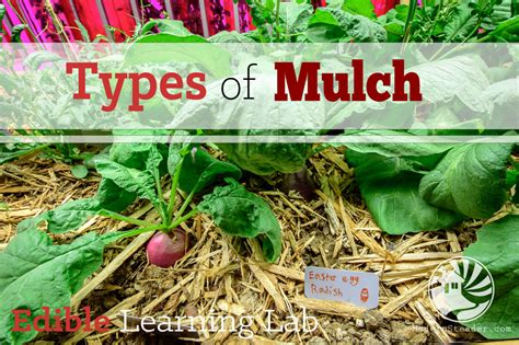garden mulch types types of mulch modern steader