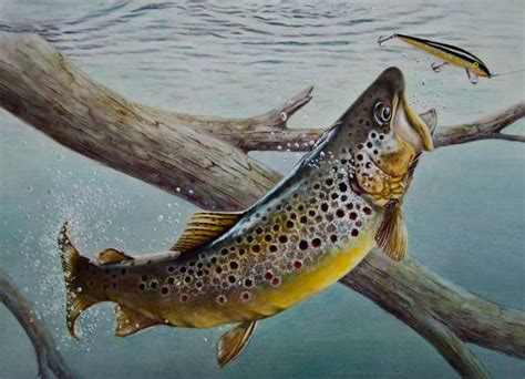 trout art needn t involve a fly twin cities
