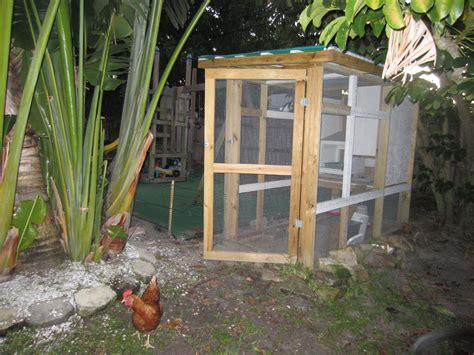 urban backyard chickens urban farming modern pioneer mom