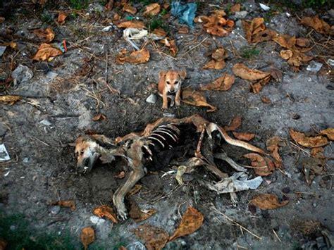imagenes de animales impactantes lista las im 225 genes m 225 s impactantes del 2012