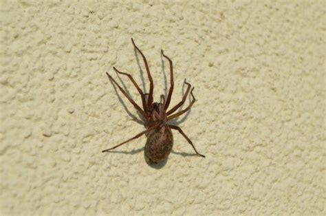 scorpioni in casa come eliminarli eliminare i ragni consigli e rimedi naturali