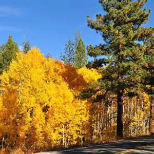 where to see fall color in northern california via magazine