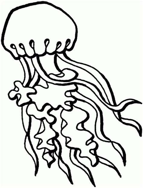 coloring pages of a jellyfish jelly fish coloring pages coloring home