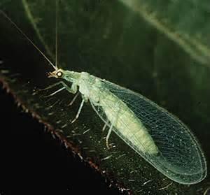garden pests ontario identifying garden pests and bugs in ontario the