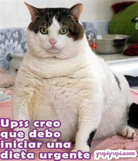 imagenes graciosas de gatos related keywords suggestions for imagenes chistosas de gatos