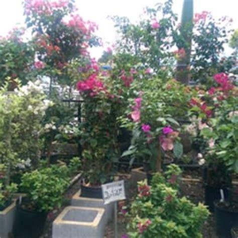 tropical fruit trees for sale uk jene s tropical fruit trees 34 photos 11 reviews