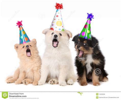 puppy singing happy birthday puppies singing happy birthday song stock photo image of pedigree 14223226