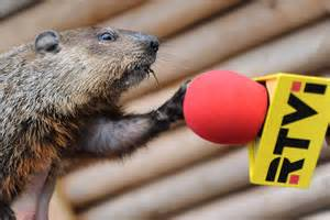 groundhog day 2016 zoo what is groundhog day 2016 13 groundhogs explain