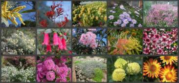 Upholstery Repairers Selecting Plants For Your Garden