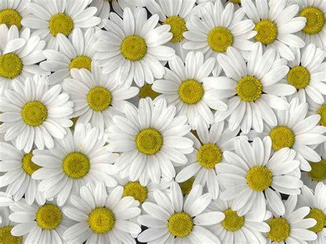 sfondi fiore sfondi fiori giorgiotave it