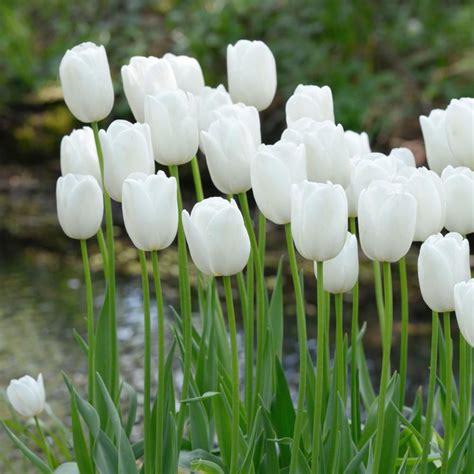 Garten Ideen 5091 zwiebelblumen f 252 r wei 223 e g 228 rten gr 252 n wei 223 g 228 rten und