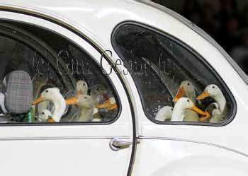 Auto Stoltefuss by Pferdefotografie Gitta Gesing