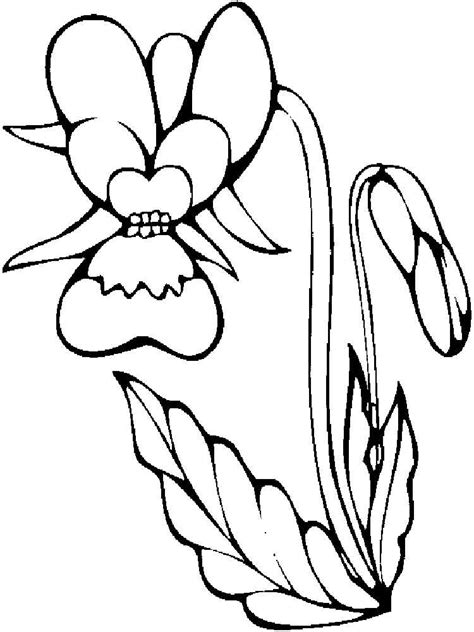orchid coloring pages orchid coloring pages download and print orchid coloring