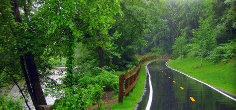 rain park park rain forest background image