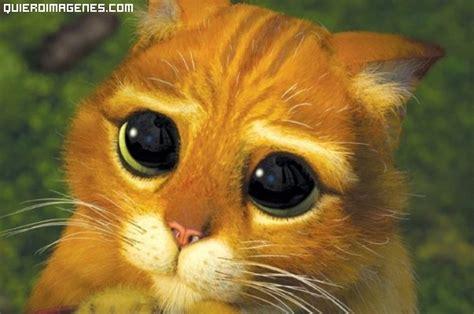 gato con botas el 8449428653 gato con botas shrek imagui