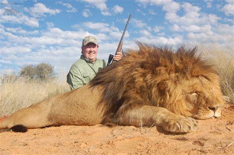 imagenes leones cazando calibres para la caza del le 243 n hunting africa