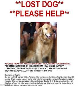 lost golden retriever reunited with their golden retriever after being lost two years in the forest