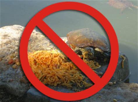 tartaruga d acqua alimentazione alimentazione tartarughe acquatiche tartapedia